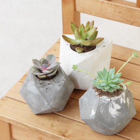 Geometric Potted Succulent Plants